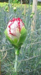 malla tutora en flor.