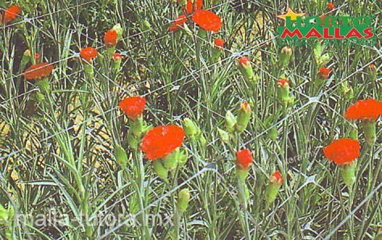 mejore sus cultivos de flores con malla tutora HORTOMALLAS
