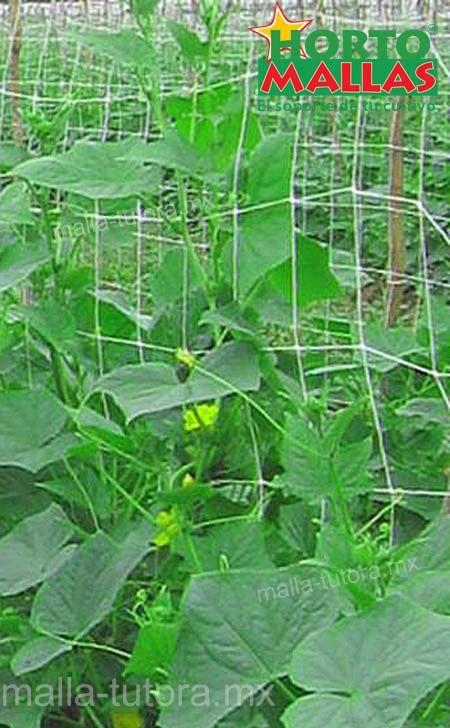 mejor producción de tu cultivo con malla tutora HORTOMALLAS